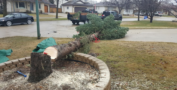 Tree Removal Services in Winnipeg, MB