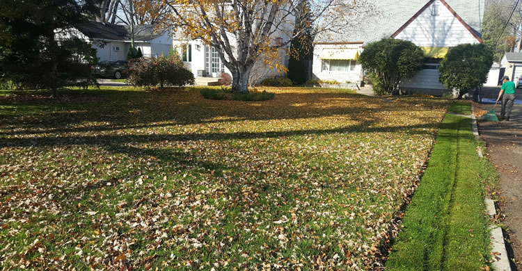Fall Property Maintenance and Yard Clean Ups Winnipeg MB
