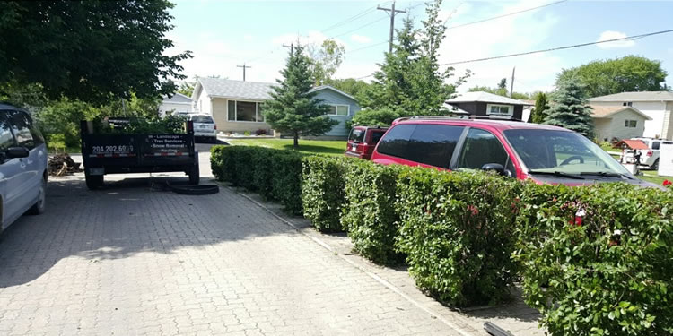 Tree and Hedge Trimming in Winnipeg MB