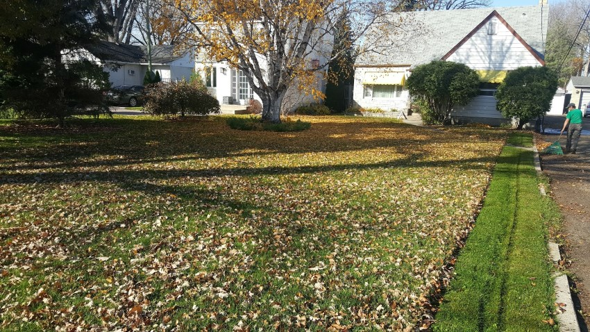leaf-clean-up-services-winnipeg (2)