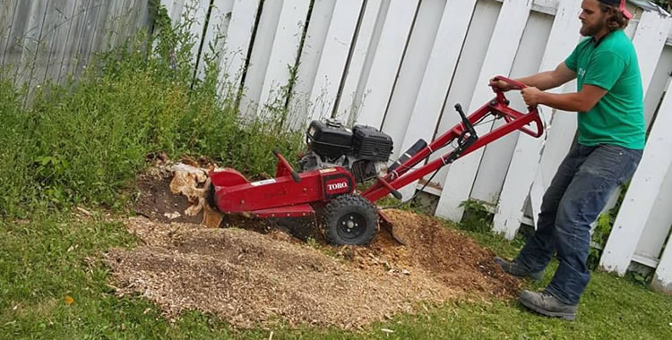 Stump Grinding Services in Winnipeg