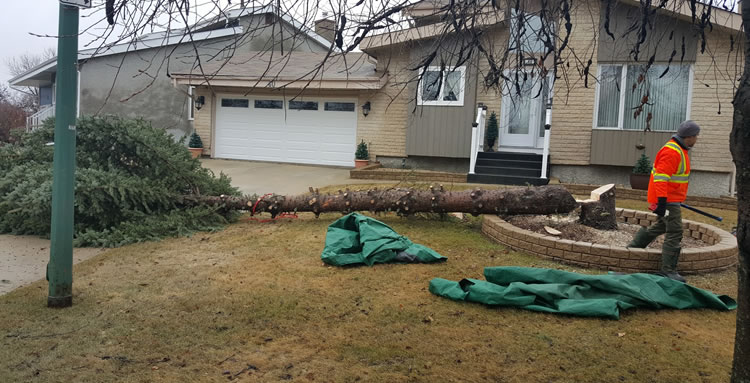 Tree Services in Winnipeg Manitoba